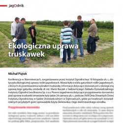 Ekologiczna uprawa truskawek