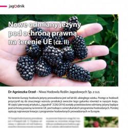 Nowe odmiany jeżyny (cz. II)