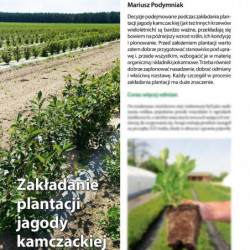 Zakładanie plantacji jagody...