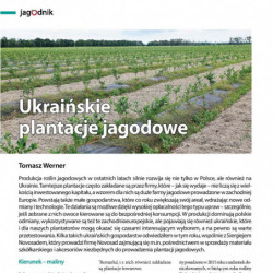 Ukraińskie plantacje jagodowe
