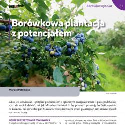 Borówkowa plantacja z...