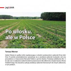 Po włosku, ale w Polsce