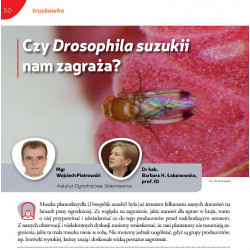 Czy Drosophila suzukii nam...