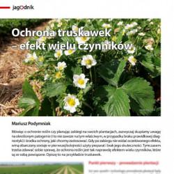 Ochrona truskawek – efekt...
