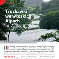 Truskawki we włoskich Alpach