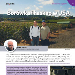 Borówka i haskap w USA