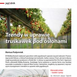 Trendy w uprawie truskawek...